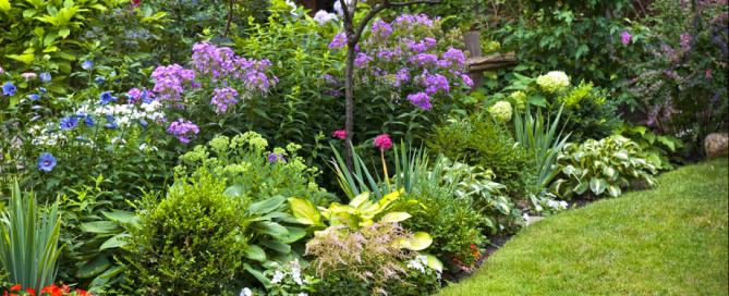 Our Perennial Favorites