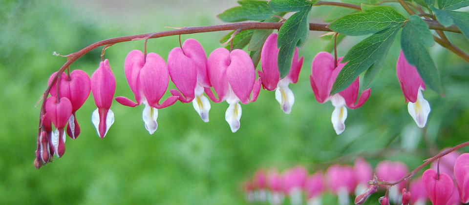 10 Romantic Flowers And Their Meanings Cole Gardens