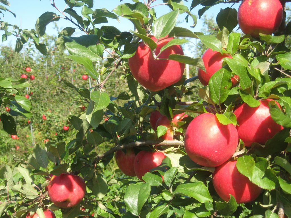 orchard full